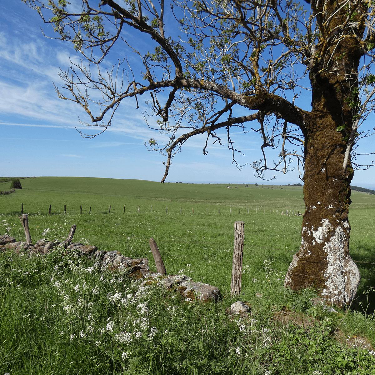 L'Aubrac au printemps